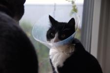Katt i tratt