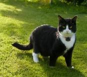 Pixie håller sig på gräsmattan
