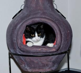 Pixie har hittat ett litet bo