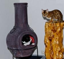 Pixie spanar på en liten leopard