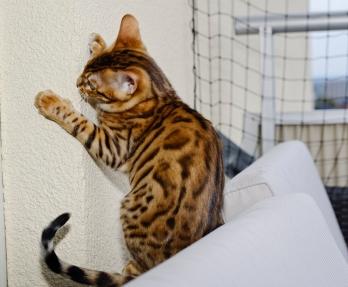 Hamilton klättrar på väggarna