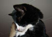 Pixie somnar sittande
