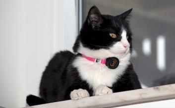 Pixie i nytt irriterande halsband