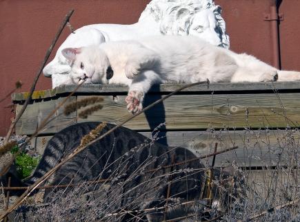 2 Vita lejon och ett grått ;)
