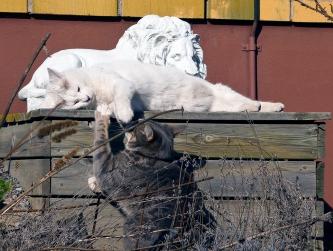 2 slapande lejon och en busunge