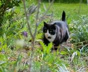 Pixie i blomsterrabatten