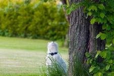 På väg upp i trädet