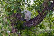 I päronträdet