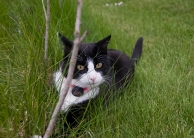 Pixie funderar över trädgården