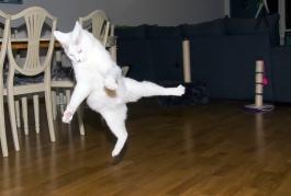 Karate katt