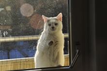 Släpp in mig nu då