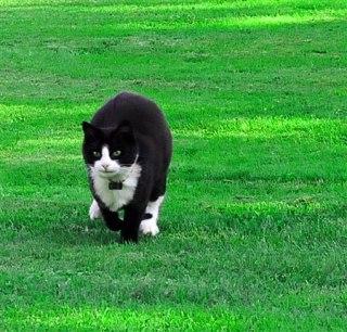 Pixie kommer med fart