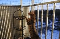 Undersöker balkongen