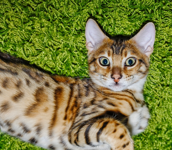 _JBA2798_DxO copy
