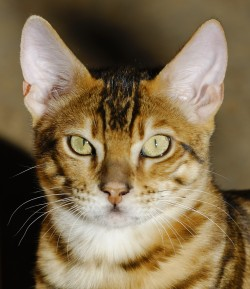 cropped-jba3879_dxo-copy.jpg