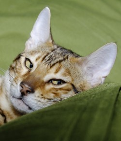 cropped-jba3957_dxo-copy1.jpg