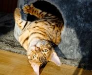 Busunge i kattbo