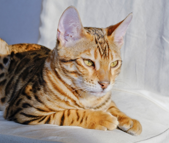 _JBA4500_DxO copy