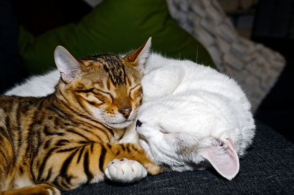 _JBA5096_DxO copy