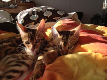 2 små bröder