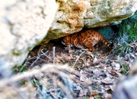 Hamilton has found himself a little cave