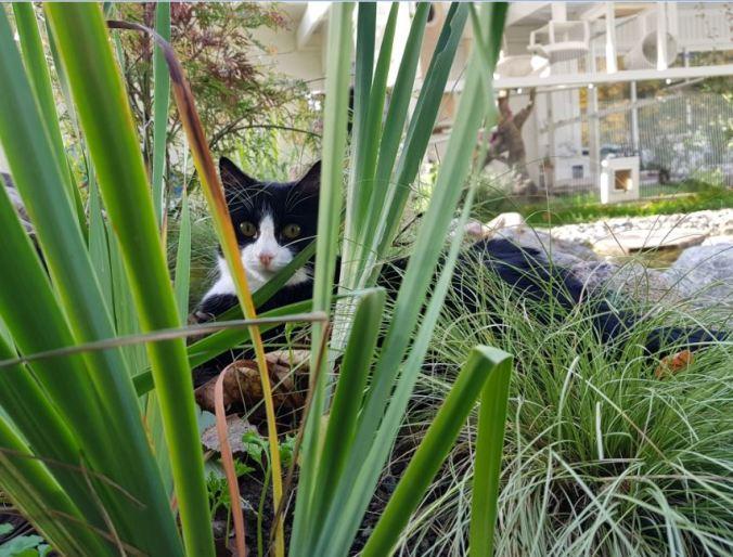 busig tjej i kattgården