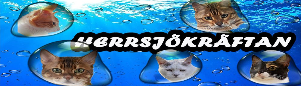 Herrsjökräftans kattblogg